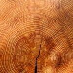 manualidades en madera mdf